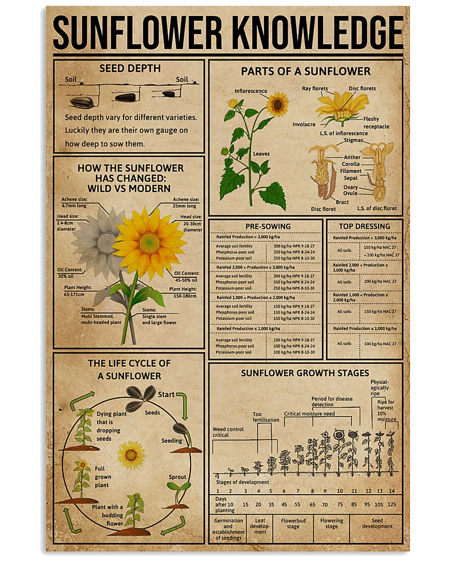 Sunflower Knowledge  11x17 Poster