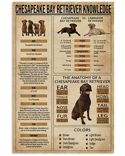 Chesapeake Bay Retriever Knowledge