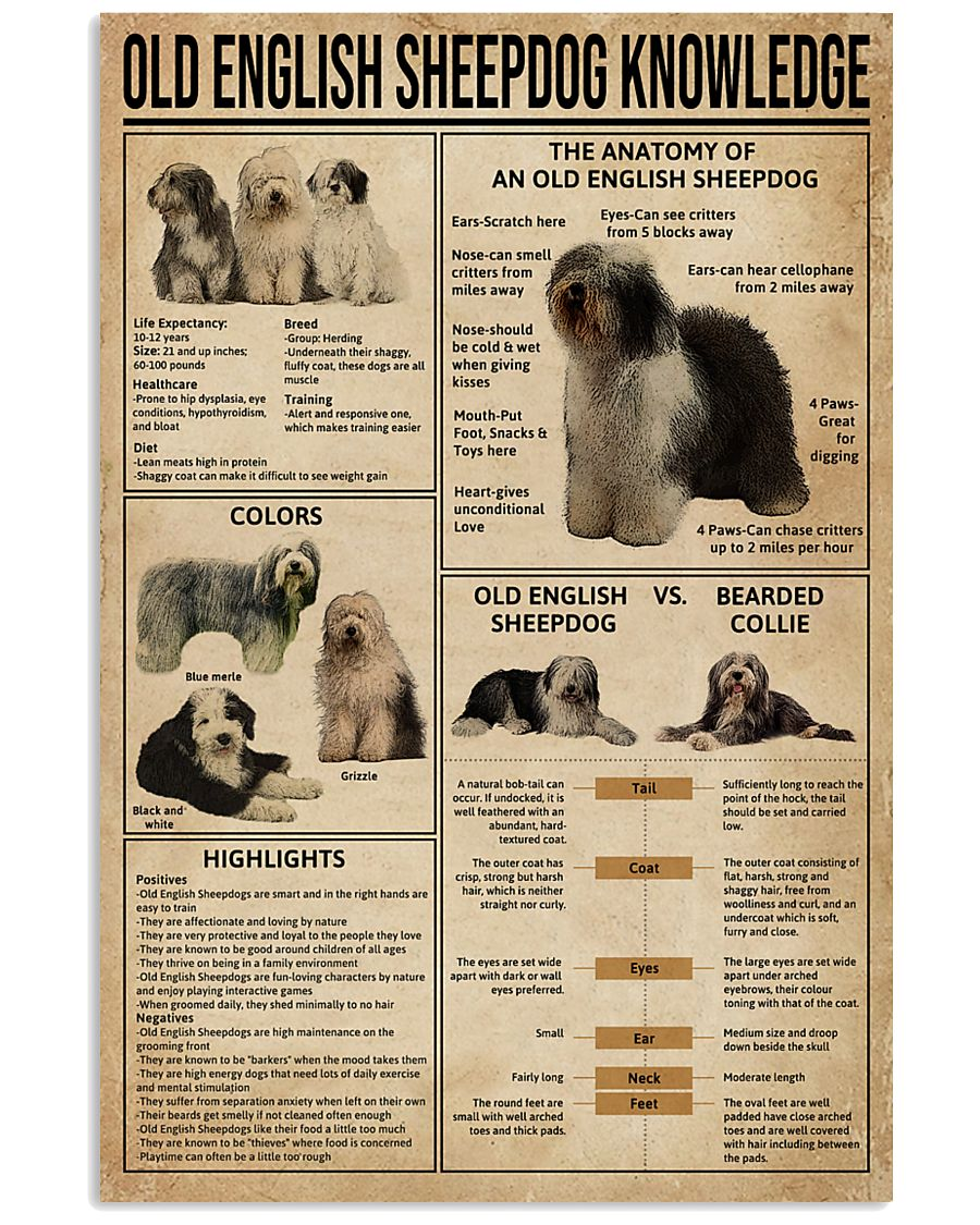 Old English Sheepdog Knowledge 11x17 Poster