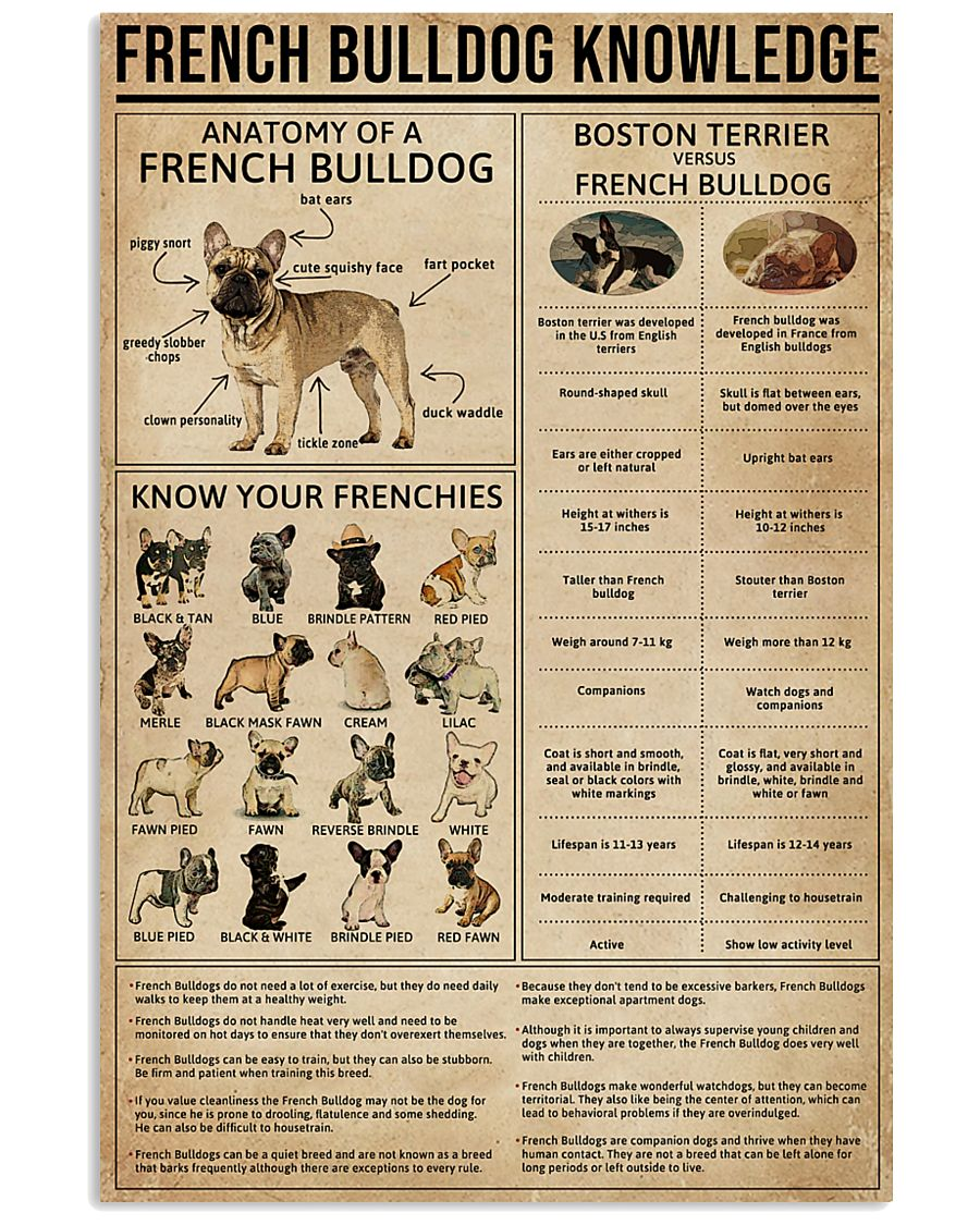 Knowledge French Bulldog 11x17 Poster
