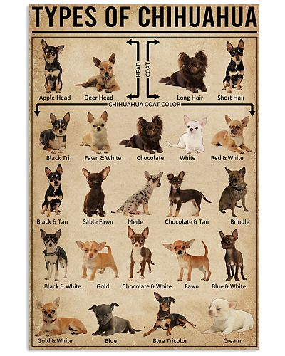 Types Of Chihuahua