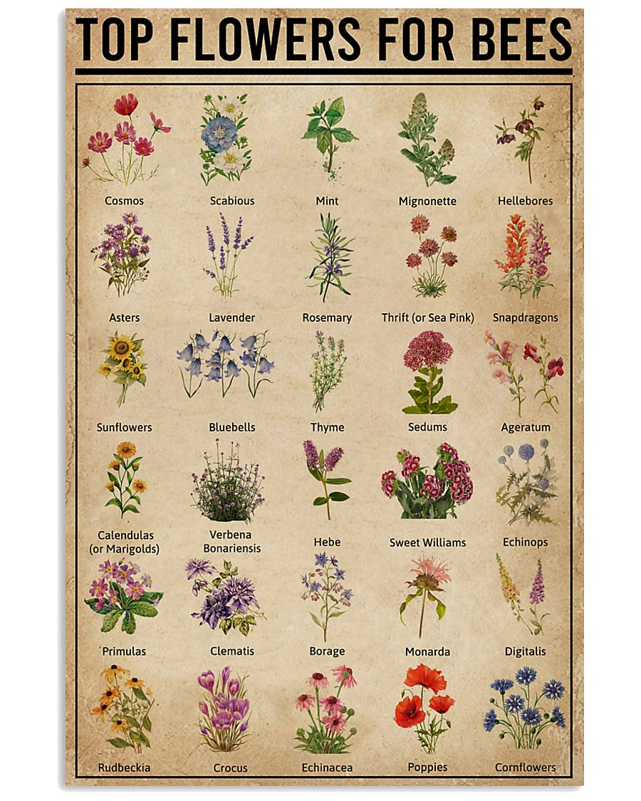 Top Flowers For Bees 11x17 Poster