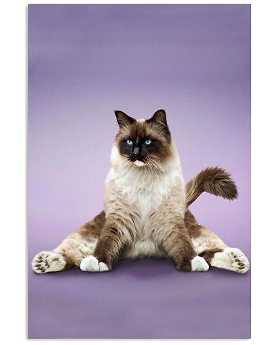 Yoga Pose Himalayan Cat