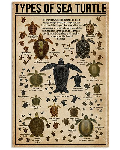 Types Of Sea Turtle