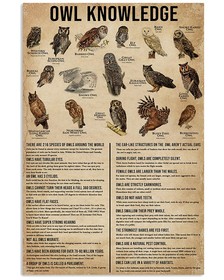 Knowledge Owls 11x17 Poster