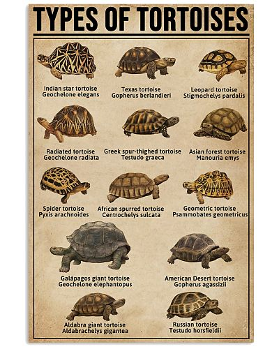Types Of Tortoises