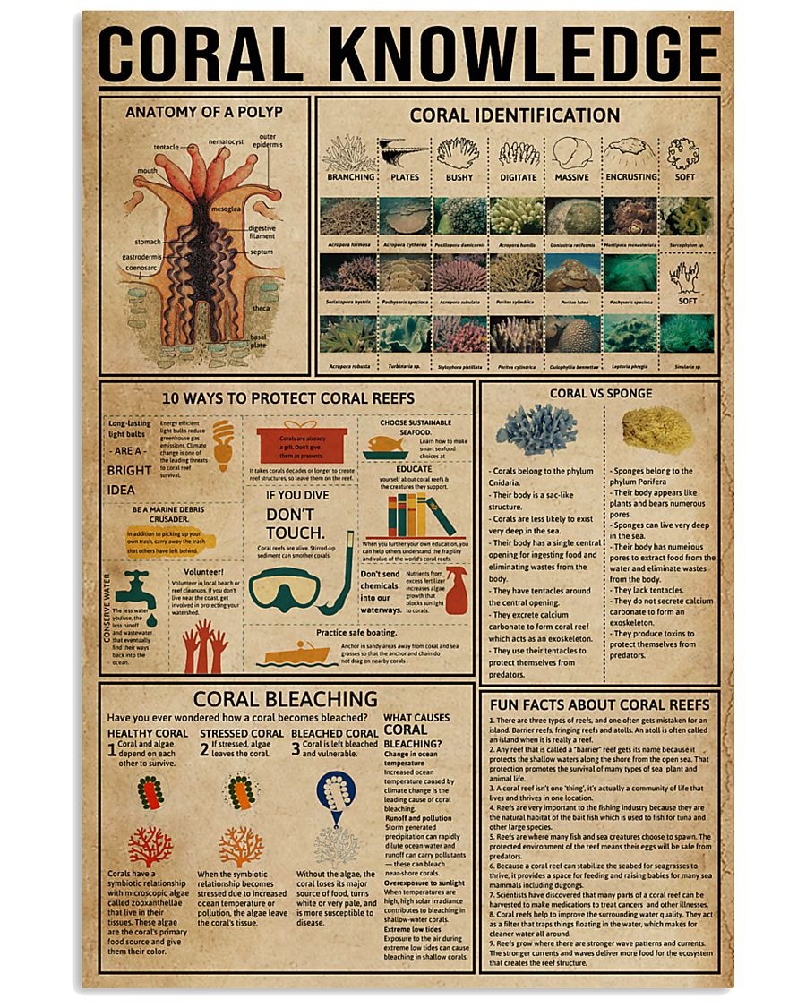 Coral Knowledge 11x17 Poster
