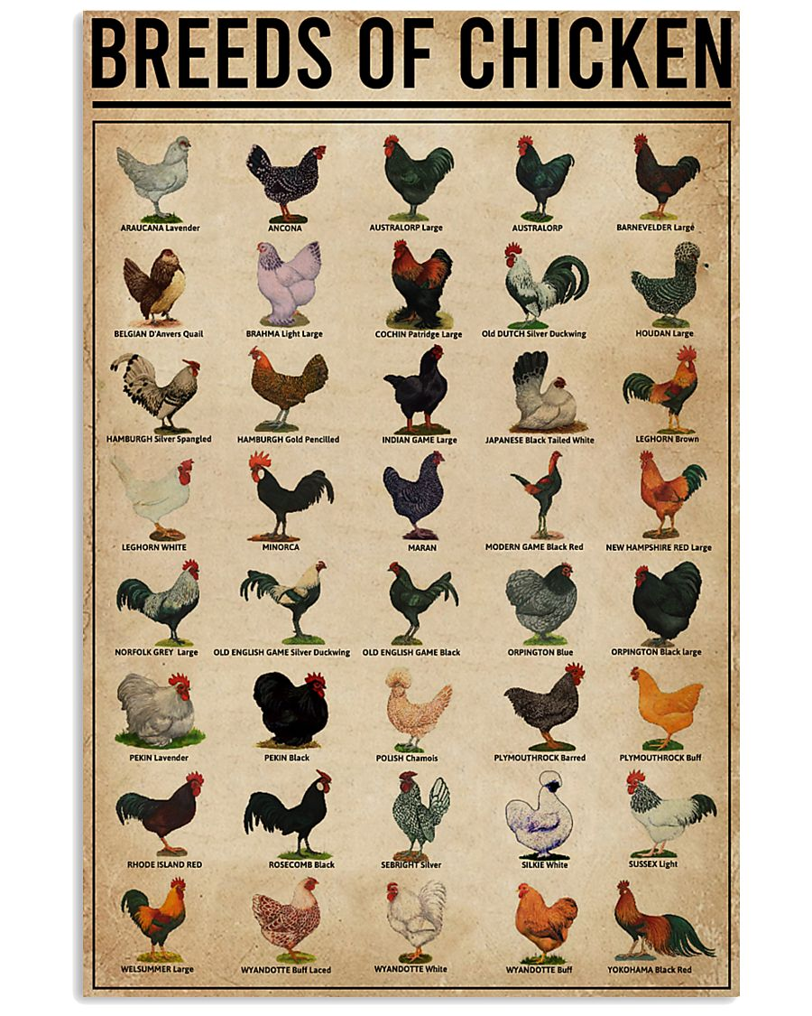 Breeds Of Chickens 16x24 Poster