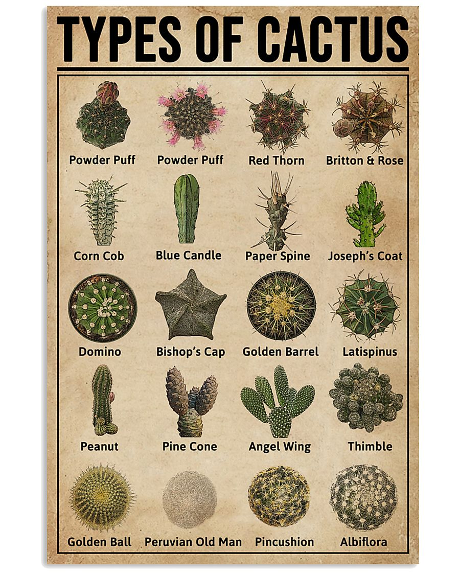 Types Of Cactus Succulents 11x17 Poster