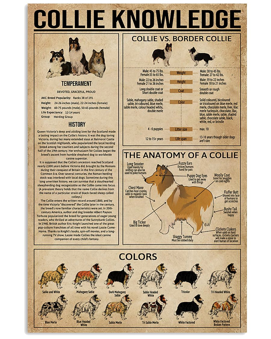 Collie Knowledge 11x17 Poster
