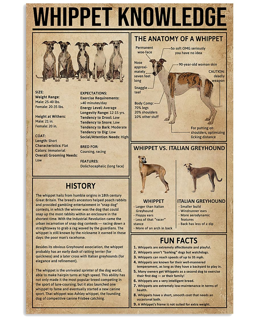 Whippet Knowledge 11x17 Poster