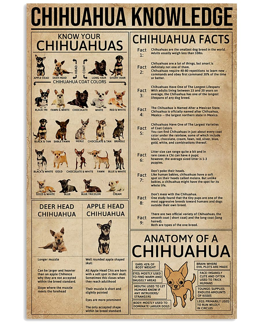 Chihuahua Knowledge Dogs 11x17 Poster