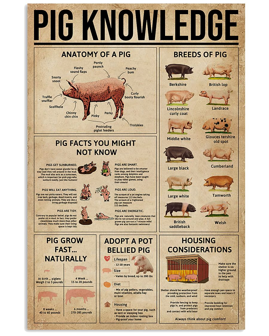 Pig Knowledge Farm 16x24 Poster