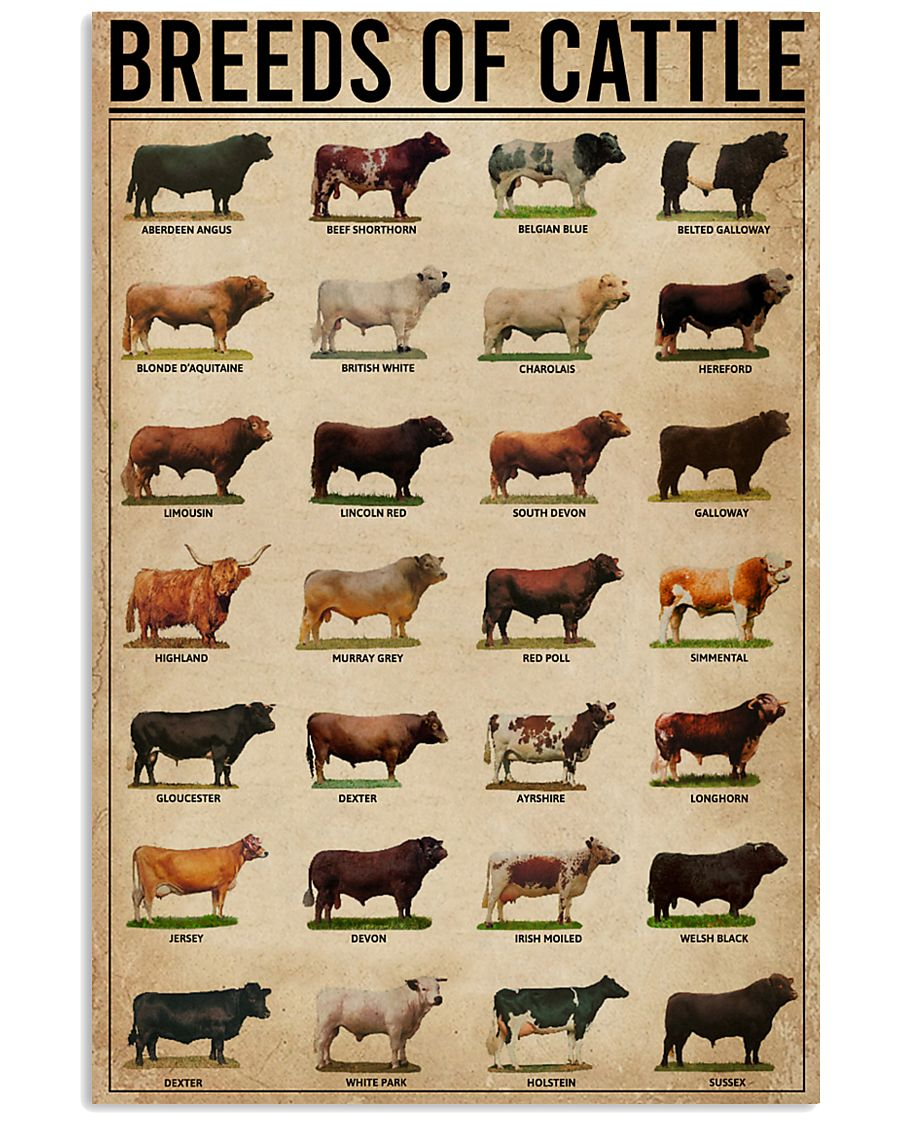 Breeds Of Cattle 16x24 Poster