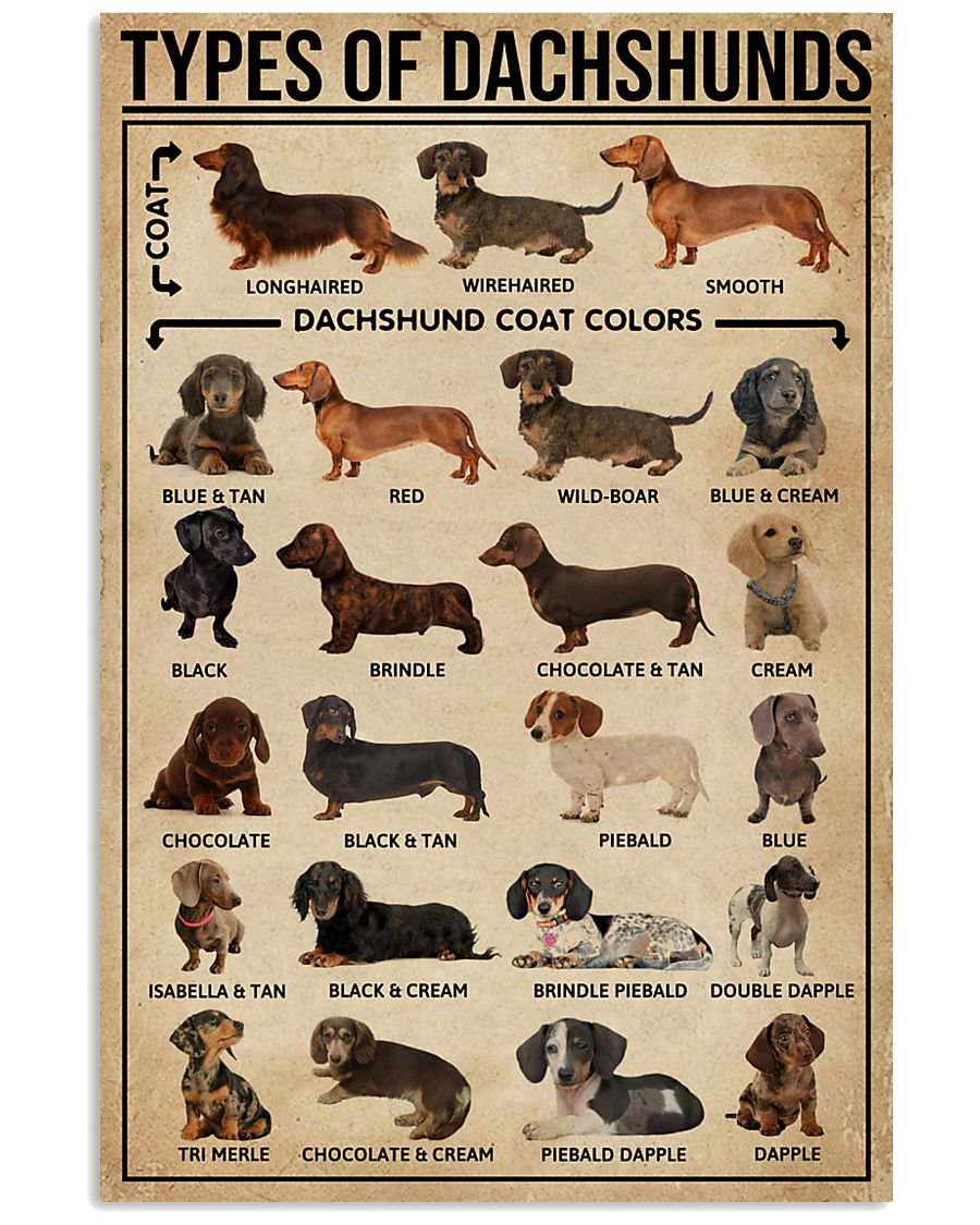 Types Of Dachshunds Dog 11x17 Poster