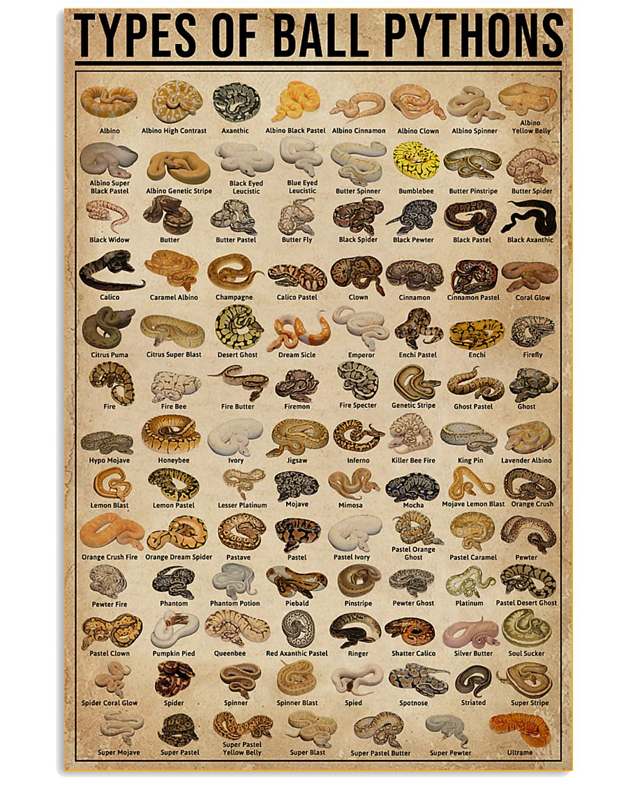 Types Of Ball Pythons 11x17 Poster
