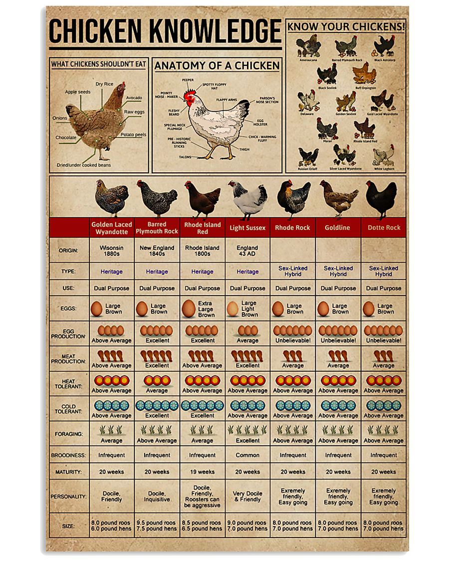 Knowledge Chickens 16x24 Poster