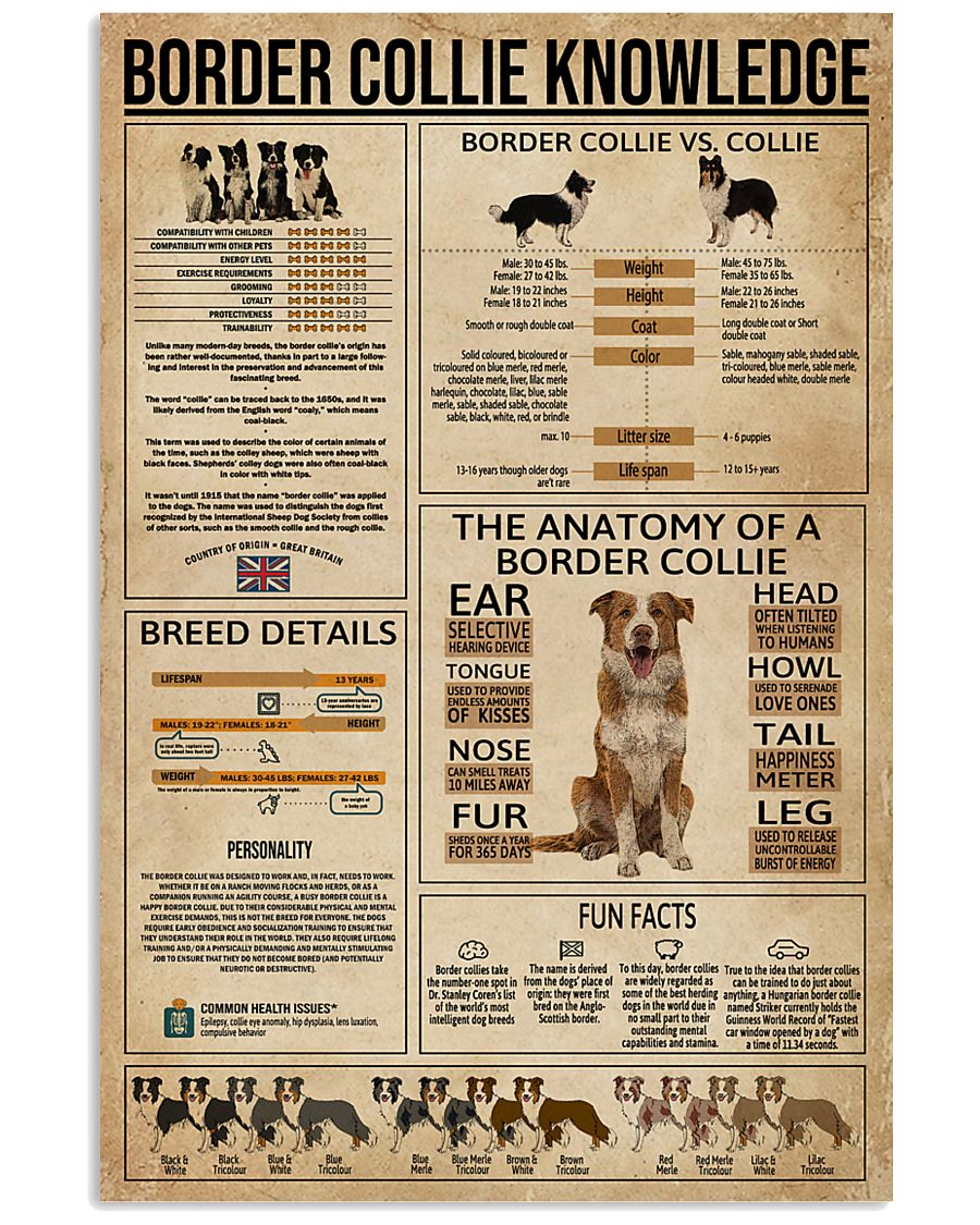 Border Collie Knowledge Dog 11x17 Poster