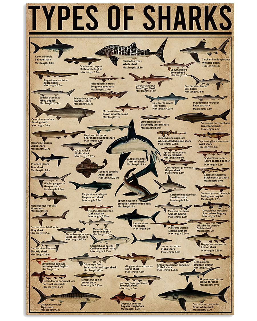 Types Of Shark Animal 16x24 Poster