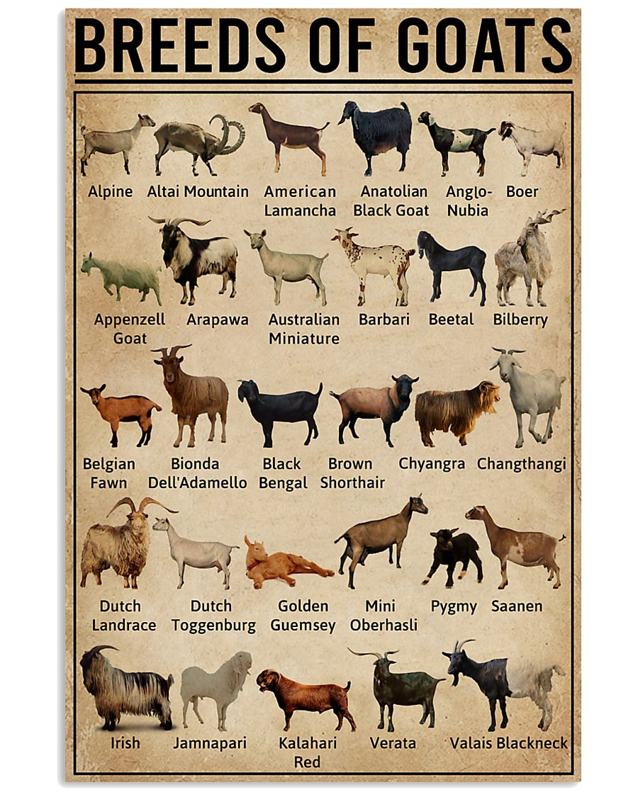 Breeds Of Goat 11x17 Poster