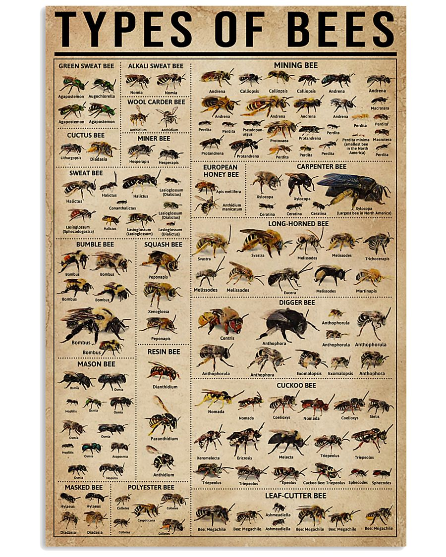Types Of Bee 16x24 Poster