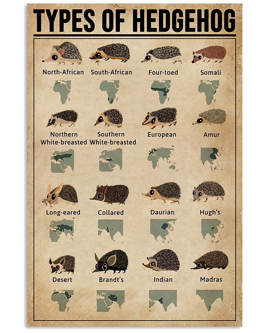 Types Of Hedgehog 11x17 Poster
