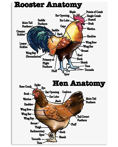 Chicken Rooster Anatomy