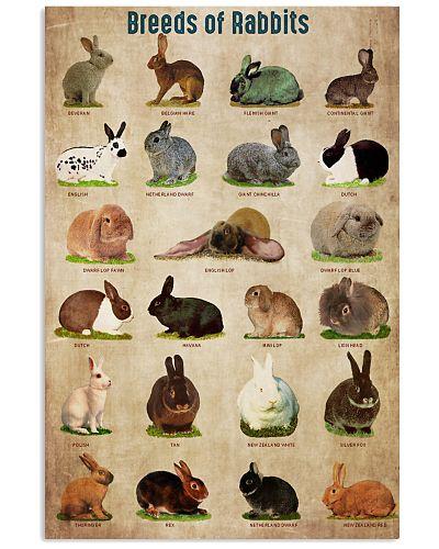 Rabbit Breed Of Rabbits