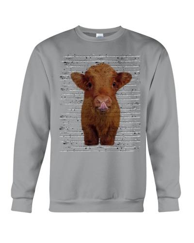 Baby Cow face Cow Heifer Farm