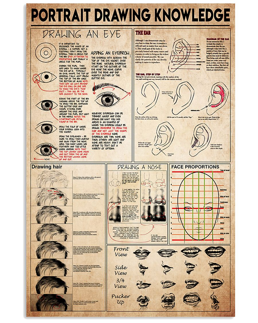 portrait drawing knowledge 11x17 Poster