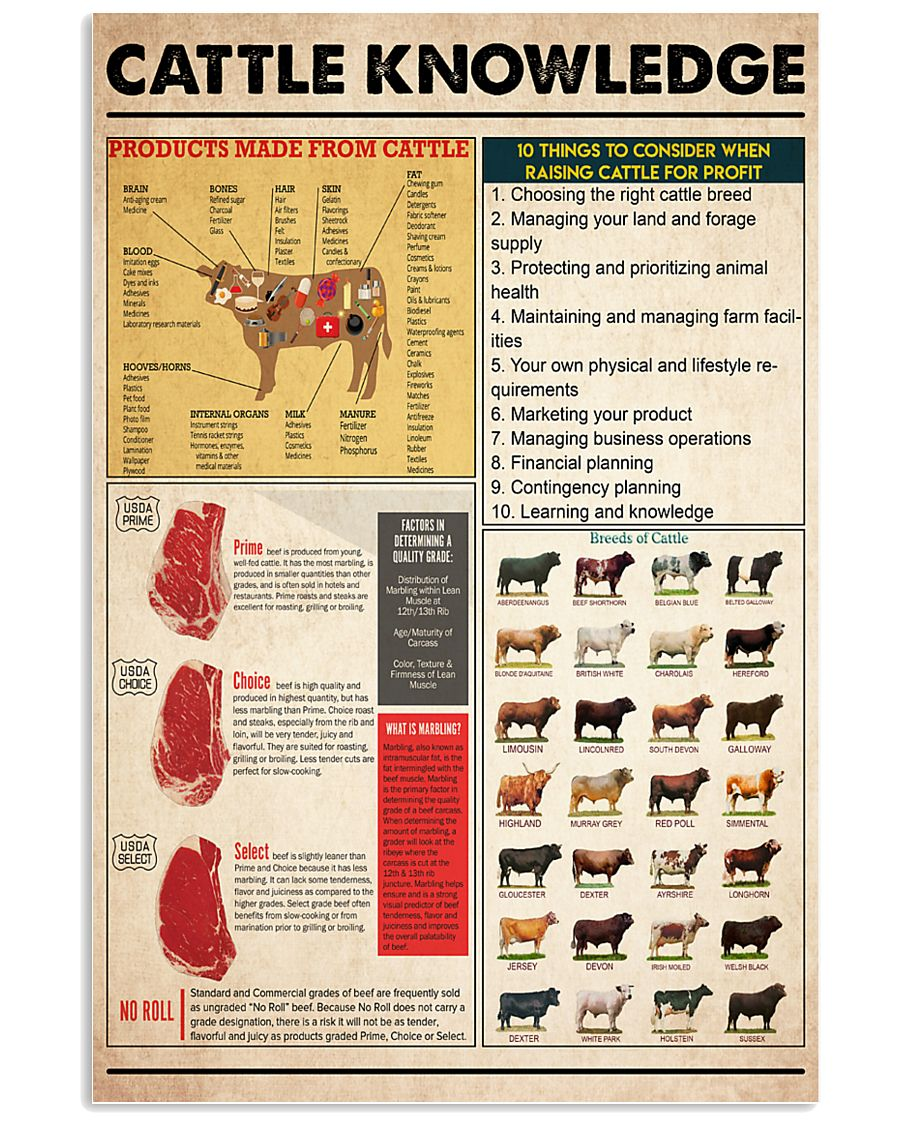 Cattle Knowledge 11x17 Poster