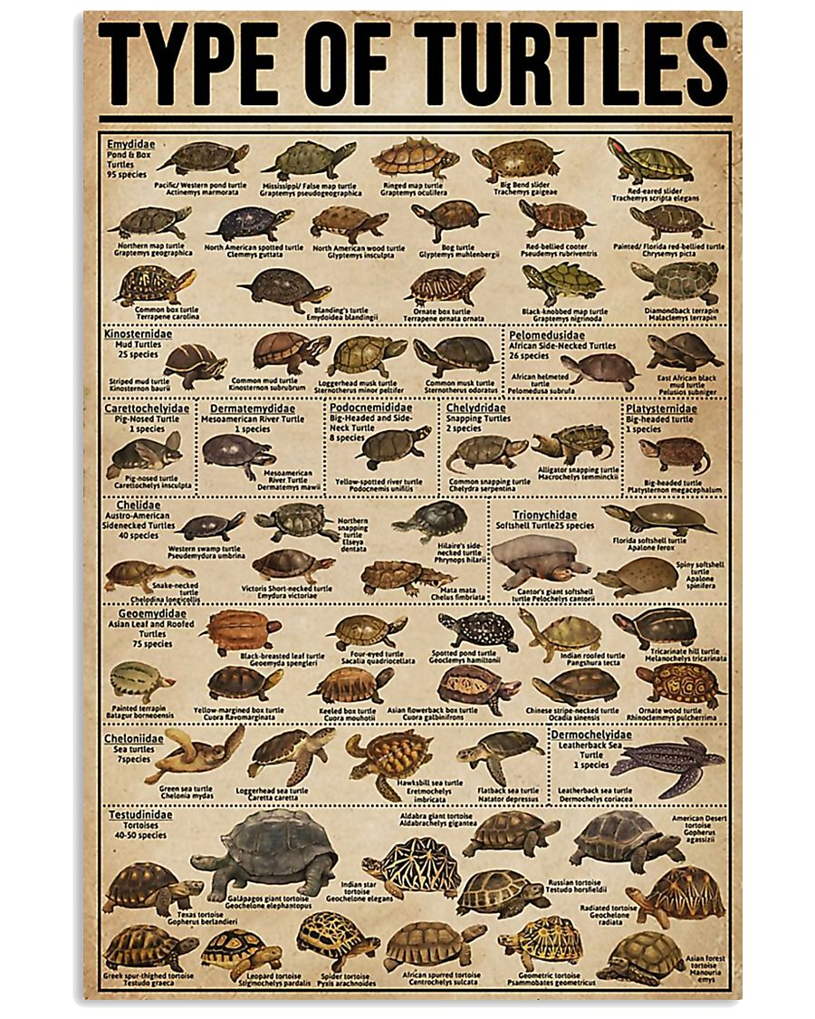TYPE OF TURTLE 11x17 Poster