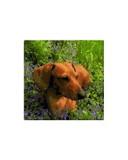 Dachshund in field of flowers Square Magnet thumbnail
