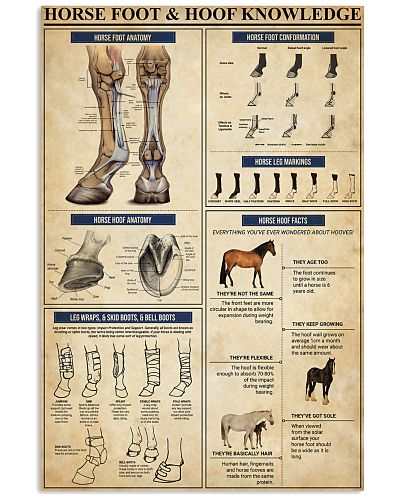 Horse Foot And Hoof Knowledge