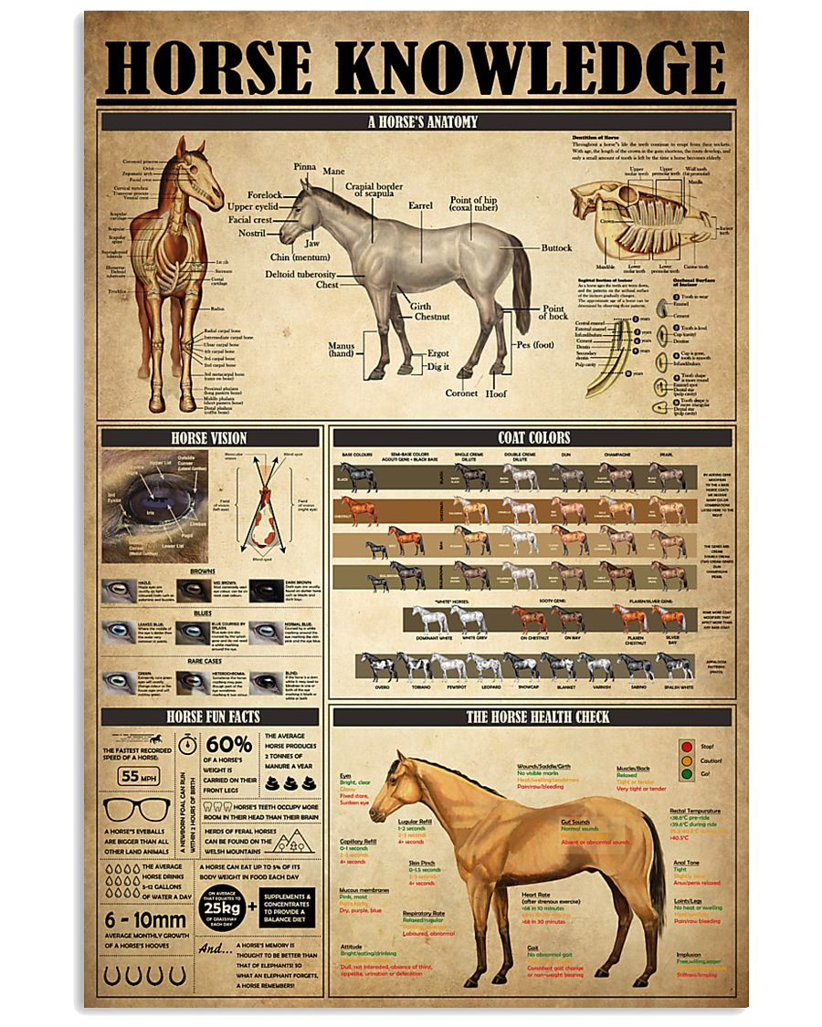Horse Knowledge 4 24x36 Poster