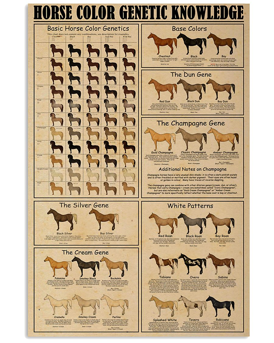 Horse Color Genetic Knowledge 16x24 Poster