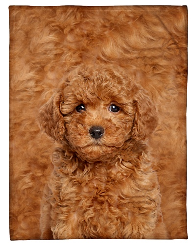 Poodle Funny Blanket Beauty Graphic Design