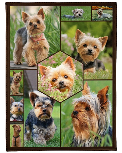 Yorkshire Terrier Funny Face Beauty Graphic Design