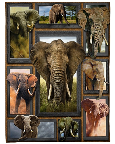 Elephant Window