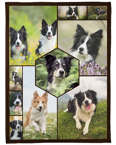 Border Collie Funny Faces Beauty Graphic Design