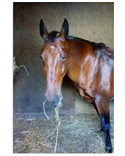 Beautiful horse  11x17 Poster front
