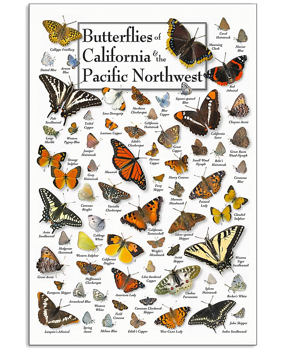 BUTTERFLIES OF CALIFORNIA AND PACIFIC NORTHWEST 11x17 Poster