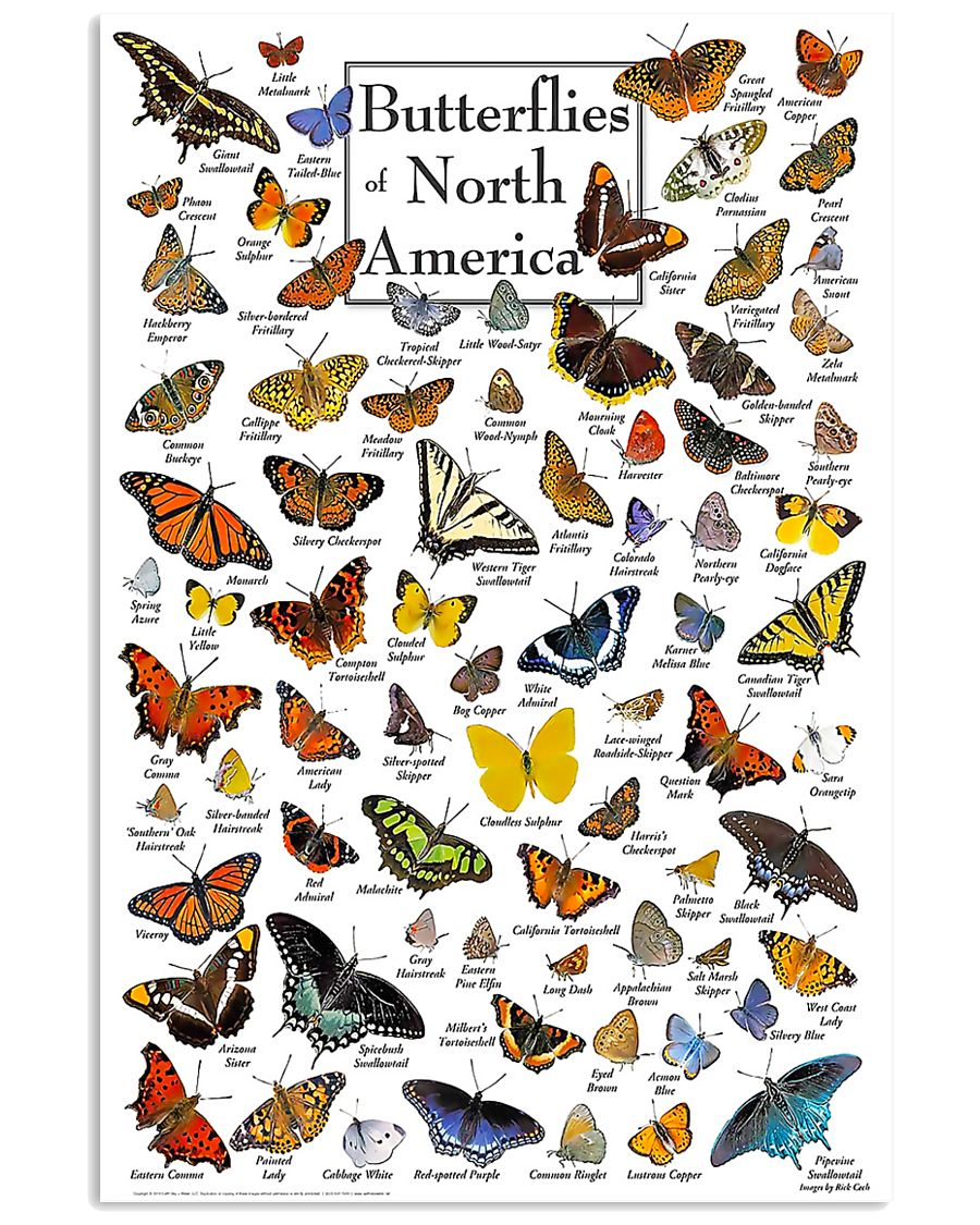 BUTTERFLIES OF NORTH AMERICA 11x17 Poster