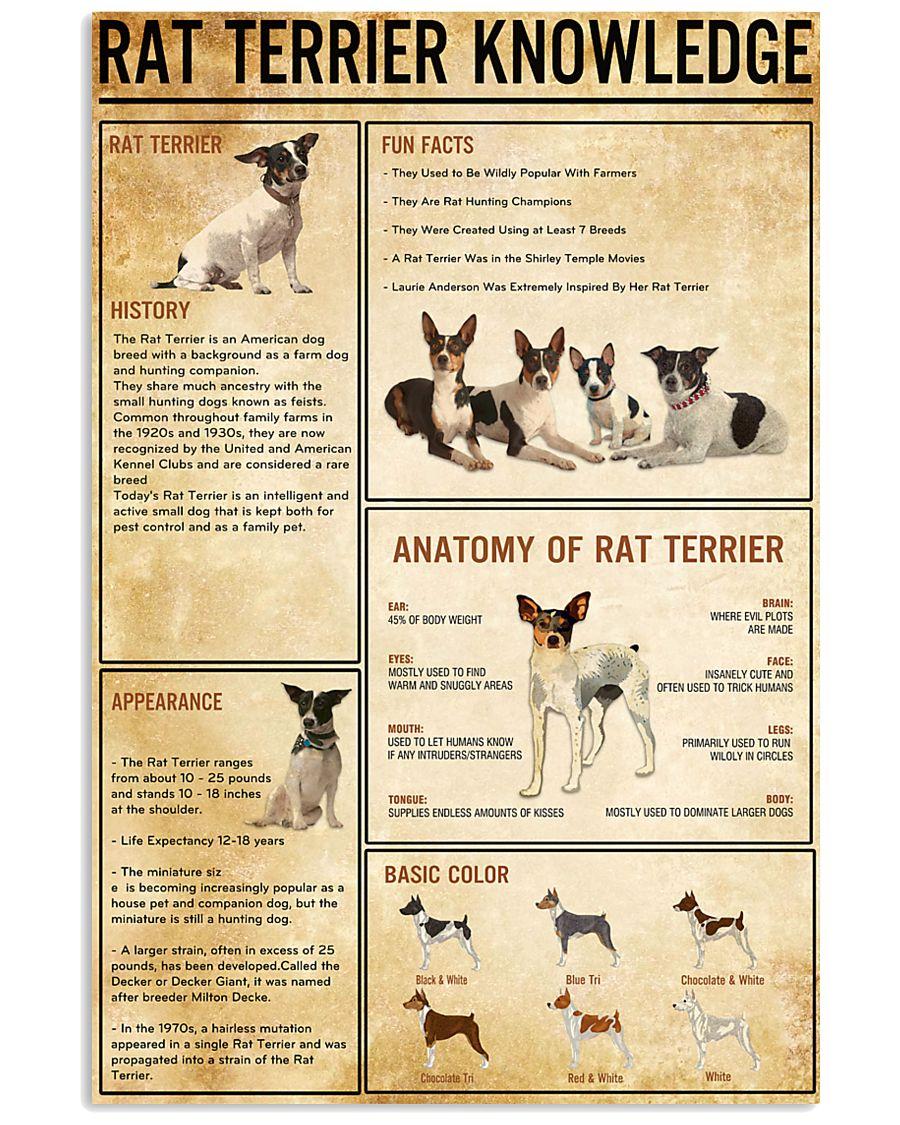 RAT TERRER Knowledge 11x17 Poster