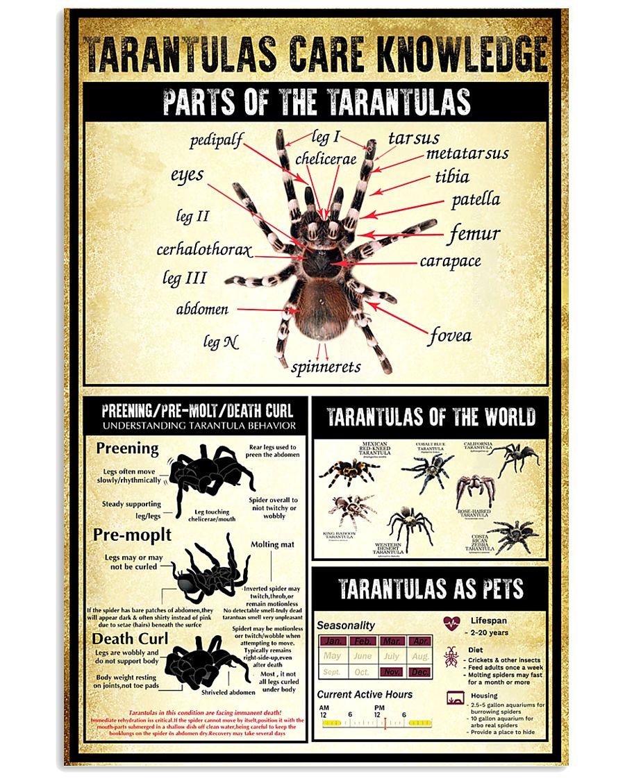 Tarantula Care Knowledge 11x17 Poster