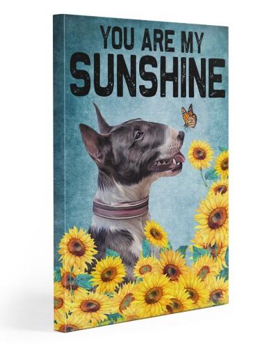Bull Terrier sunshine