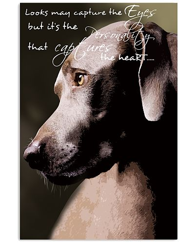 That Capture and The Heart Weimaraner Dog