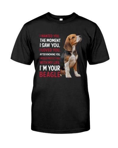 Beagle Wanted
