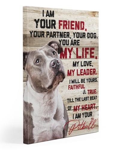 Pitbull Friend