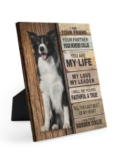 Border Collie Partner 8x10 Easel-Back Gallery Wrapped Canvas thumbnail